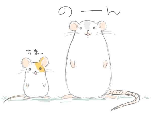 ラット と マウス の 違い